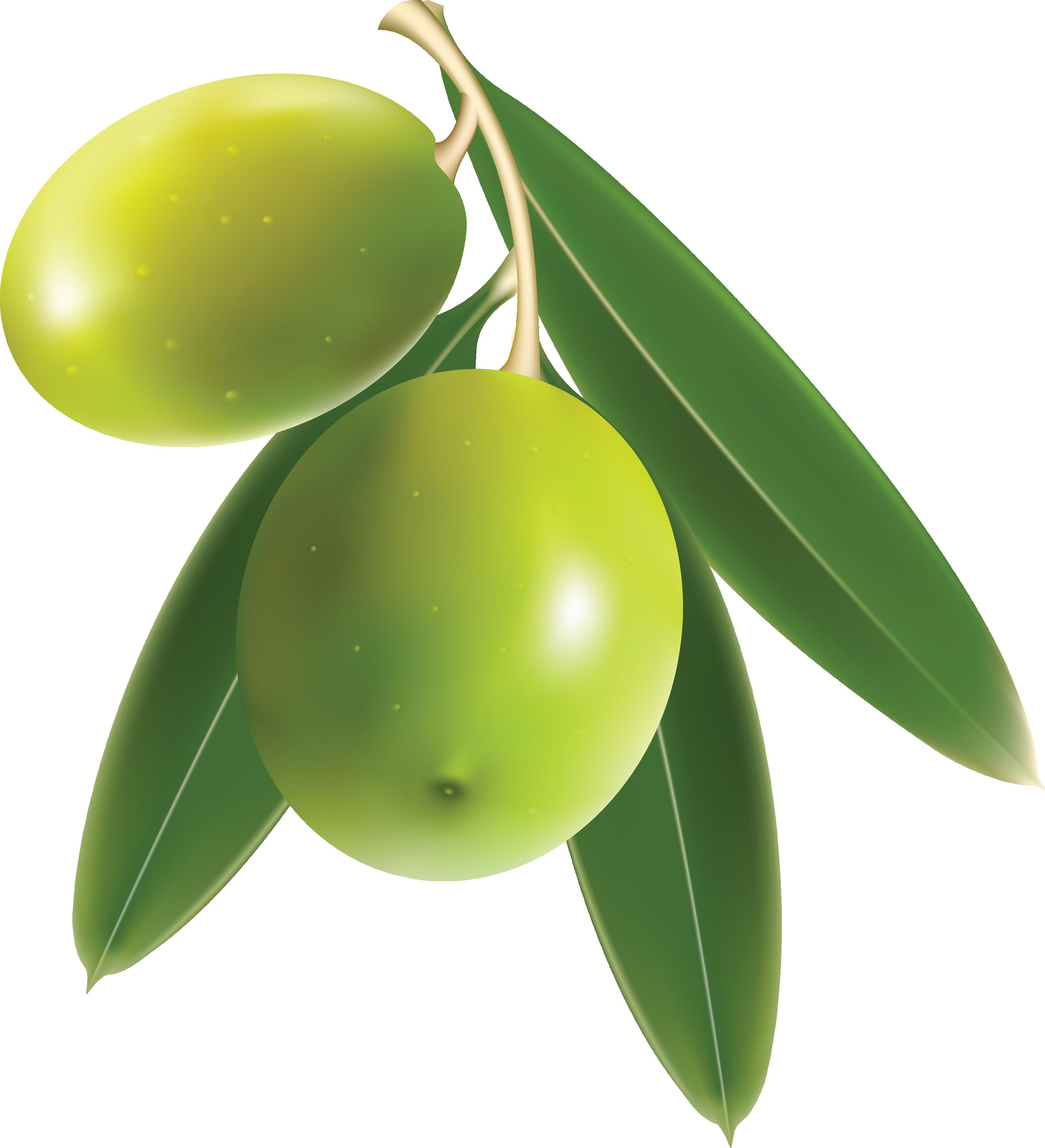 Olive-Transparent-PNG